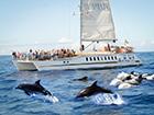 Reise Super Katamaran Kuste und Delfinen